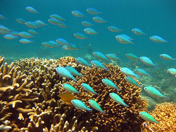 gili-air-snorkeling624